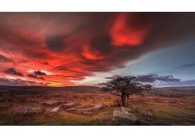 地球,风景,自然,树,天空,云,壁纸,(1)图片