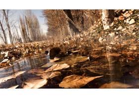 秋天,自然,特写镜头,叶子,水,深度,关于,领域,壁纸,