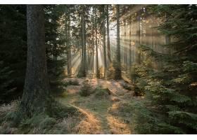阳光,自然,森林,树,壁纸,(9)图片