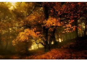 秋天,自然,雾,树,叶子,壁纸,