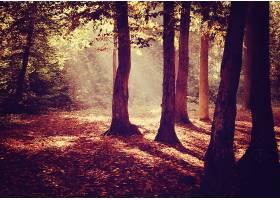 阳光,自然,森林,树,快活的,壁纸,图片
