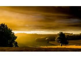 地球,风景,自然,树,快活的,壁纸,图片