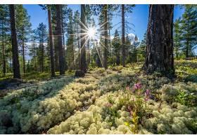 阳光,自然,森林,树,植物,壁纸,图片