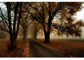 秋天,雾,自然,树,路,壁纸,图片