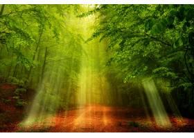 阳光,自然,森林,树,泥土,路,壁纸,图片