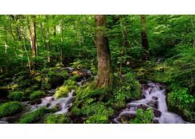 溪流,岩石,树,绿色的,森林,苔藓,壁纸,图片