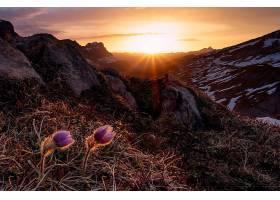 日出,自然,花,风景,阳光,壁纸,图片