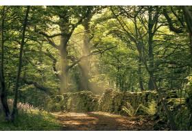 阳光,自然,森林,树,温室,壁纸,(1)图片