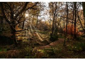 阳光,自然,森林,树,秋天,壁纸,图片