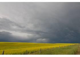 地球,领域,自然,云,地平线,黄色,花,夏天,壁纸,