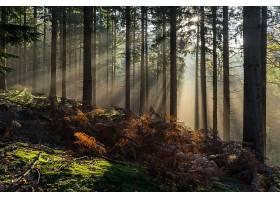 阳光,自然,森林,树,蕨,壁纸,(1)图片