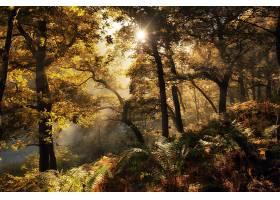 阳光,自然,森林,树,蕨,壁纸,图片