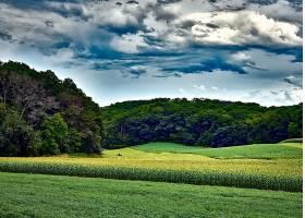 地球,领域,自然,云,夏天,壁纸,