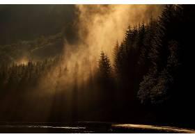 阳光,自然,森林,树,雾,壁纸,图片