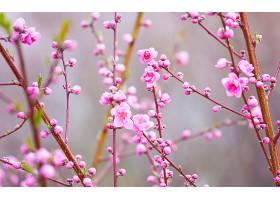 地球,花,花,自然,花,粉红色,花,树枝,壁纸,图片