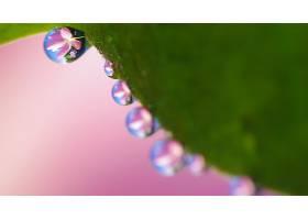 水,滴,自然,巨,粉红色,花,反射,壁纸,图片
