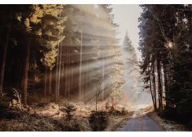 阳光,自然,森林,泥土,路,树,壁纸,图片