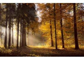 阳光,自然,森林,秋天,壁纸,图片