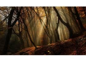 阳光,自然,森林,秋天,树,壁纸,(1)图片