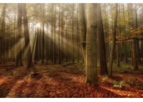 阳光,自然,森林,秋天,树,壁纸,图片
