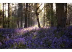 阳光,自然,森林,花,紫色,花,树,壁纸,图片