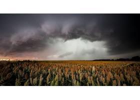 地球,领域,自然,夏天,云,壁纸,