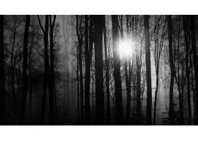 阳光,自然,森林,雾,太阳,壁纸,图片