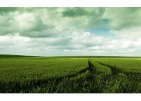 地球,领域,自然,夏天,地平线,云,壁纸,