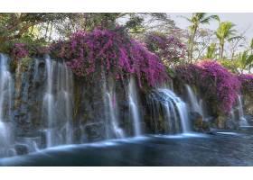 瀑布,瀑布,岩石,池塘,花,紫色,花,壁纸,图片