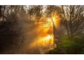 阳光,自然,河,雾,树,壁纸,图片