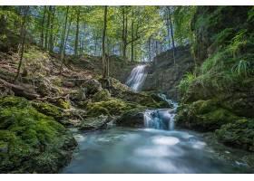 瀑布,瀑布,溪流,自然,岩石,树,森林,壁纸,图片