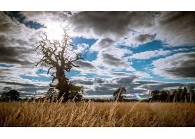 地球,领域,自然,夏天,树,天空,云,扭曲的,树,壁纸,