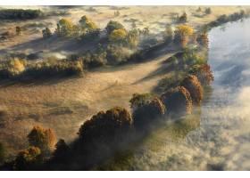 雾,快活的,天线,自然,树,壁纸,图片