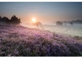 雾,早晨,花,风景,自然,日出,壁纸,图片