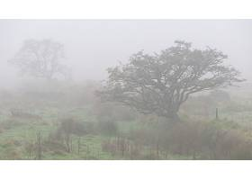 雾,树,壁纸,图片