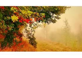 雾,树,森林,秋天,叶子,壁纸,图片