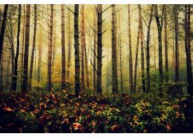 森林,自然,树,秋天,壁纸,(1)图片