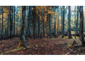 森林,自然,树,秋天,壁纸,(3)图片