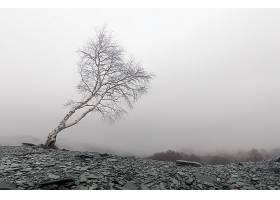 雾,树,自然,壁纸,(1)图片