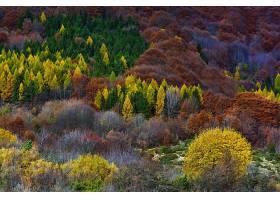 森林,自然,树,秋天,壁纸,(4)图片