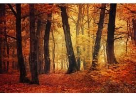 森林,自然,树,秋天,壁纸,(5)图片