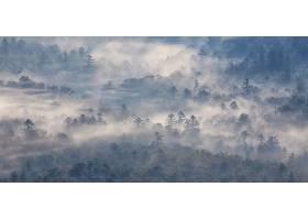 雾,森林,壁纸,图片