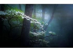 雾,森林,弹簧,花,白色,花,壁纸,图片
