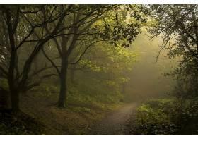 雾,森林,树,绿色的,壁纸,图片