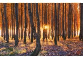 森林,自然,树,秋天,阳光,壁纸,图片