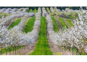 地球,领域,花,自然,树,白色,花,绿树成荫,壁纸,图片