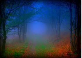 雾,森林,秋天,路,小路,壁纸,图片