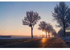 日出,路,冬天的,自然,树,绿树成荫,壁纸,图片