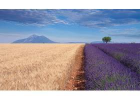 地球,领域,自然,夏天,淡紫色,紫色,花,天空,壁纸,