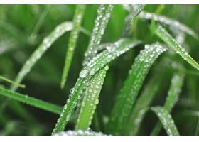 水,滴,草,自然,壁纸,图片